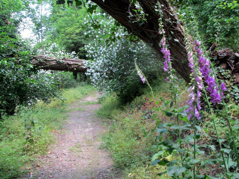 bosco-giardino-3