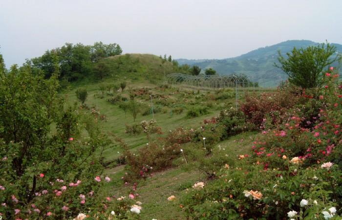 museo-rose-antiche-giardino-10-8b21243055
