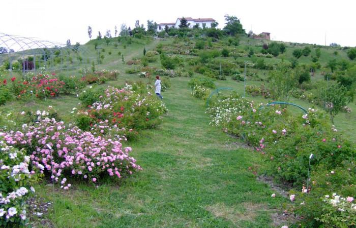 museo-rose-antiche-giardino-19-8fa0e60b91
