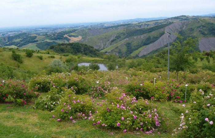 museo-rose-antiche-giardino-5-cb8d81a436