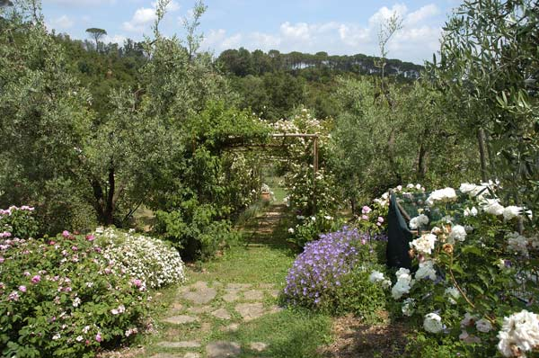 Il giardino delle rose luoghi italianbotanicaltrips - Il giardino delle rose ...