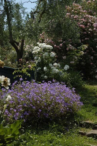 giardino-6mg