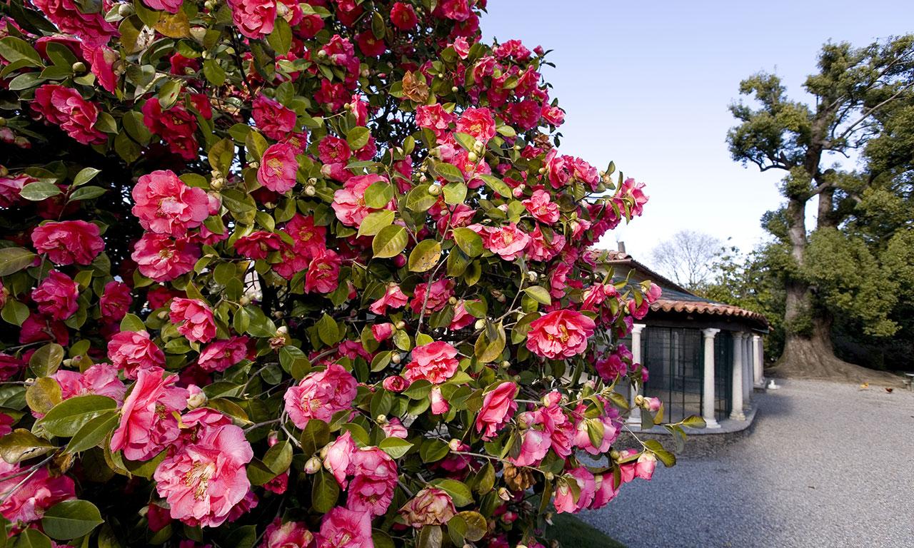 13745877623385511426-madre-giardino-09
