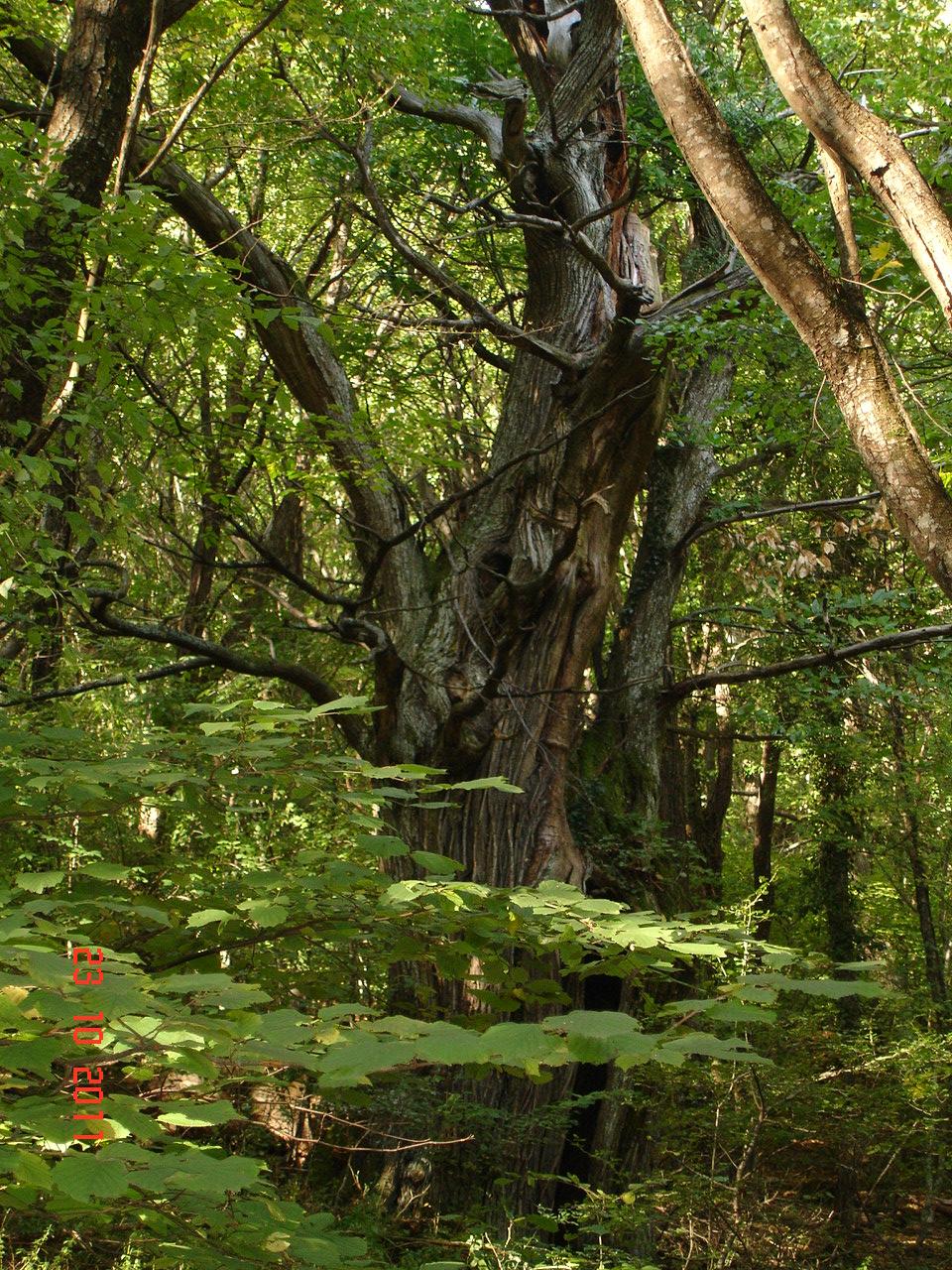 castagno-oasi-wwf-montovolo