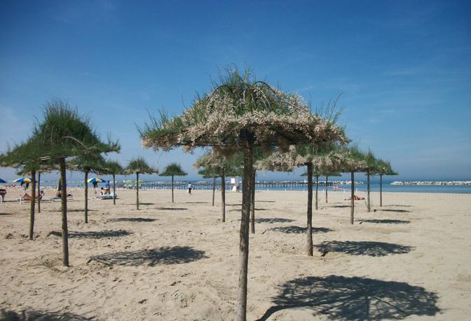 Cover Spiaggia vegetale di Cesenatico