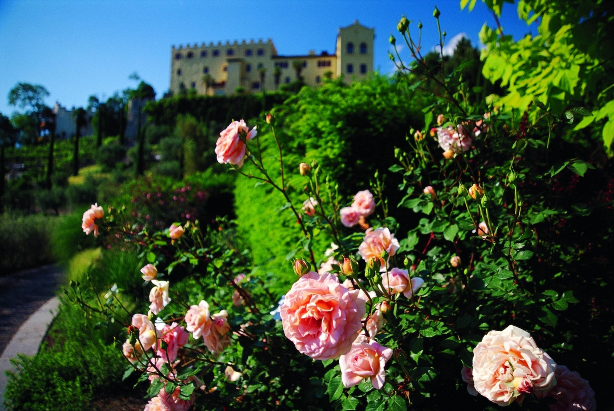 roseto-ai-giardini-di-sissi