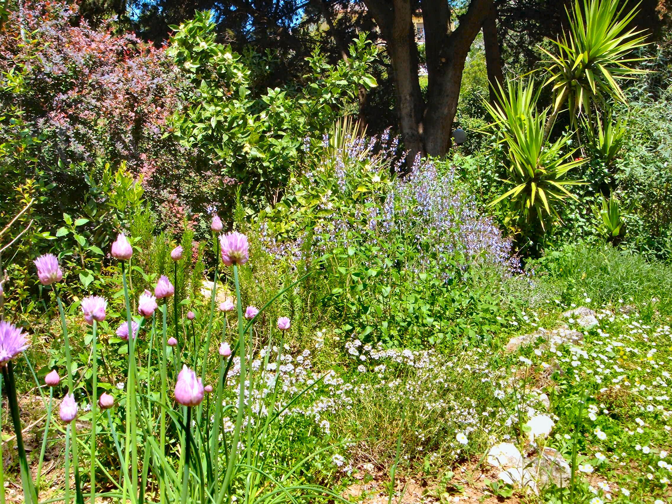 Cover Villa dei Ligustri – Parco Giardino dei Ligustri