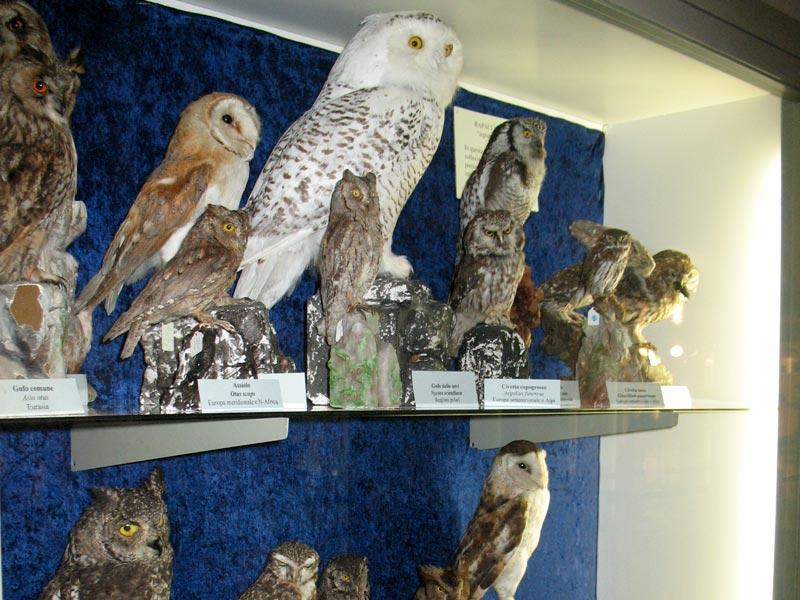 Cover Museo di Storia Naturale di Carmagnola