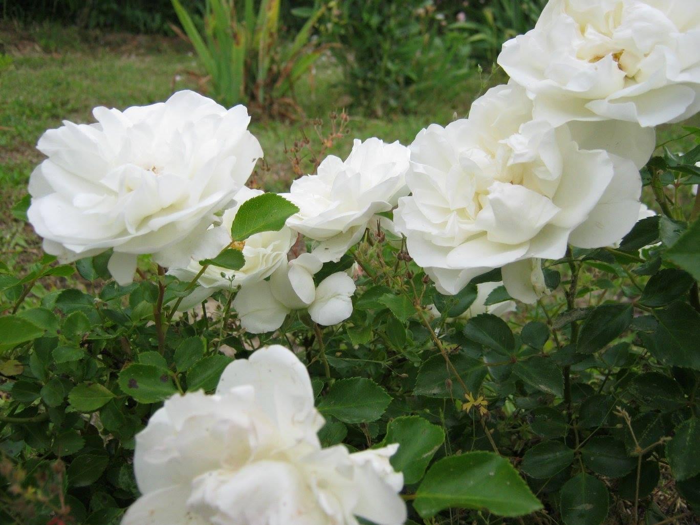roseto-3