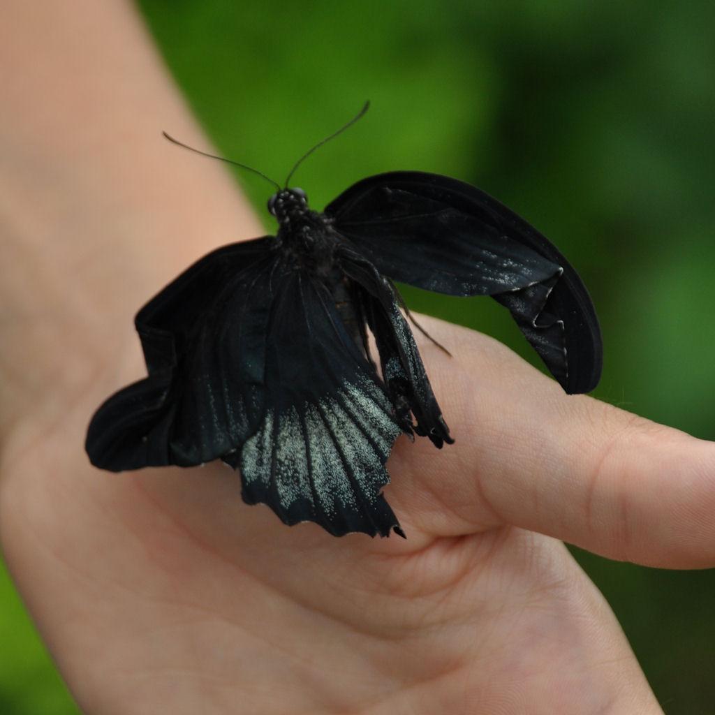 20100909-san-gavino-casa-farfalle43-d0