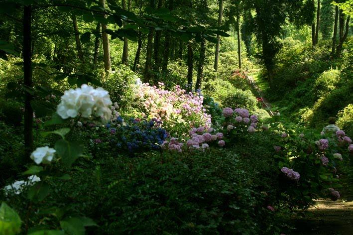 Cover Giardino Botanico delle Azalee