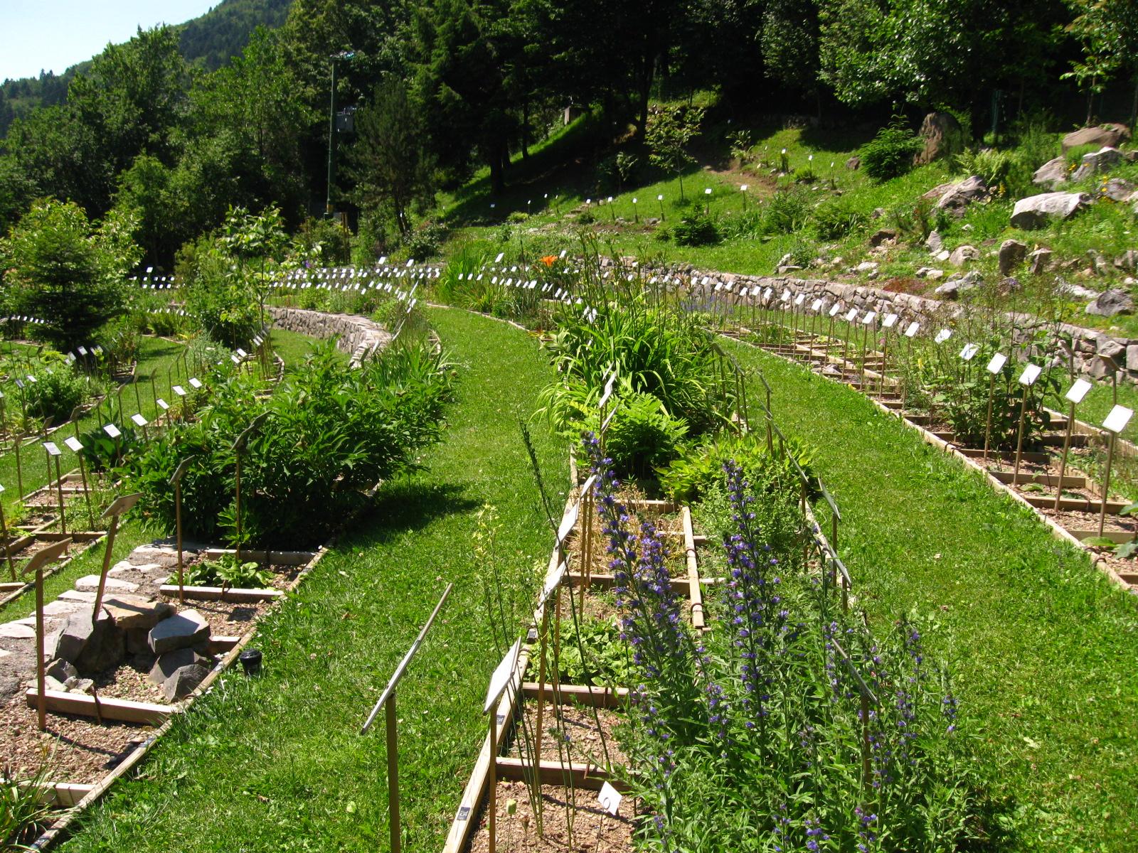 Il giardino dei semplici luoghi italianbotanicaltrips - Il giardino dei semplici ...