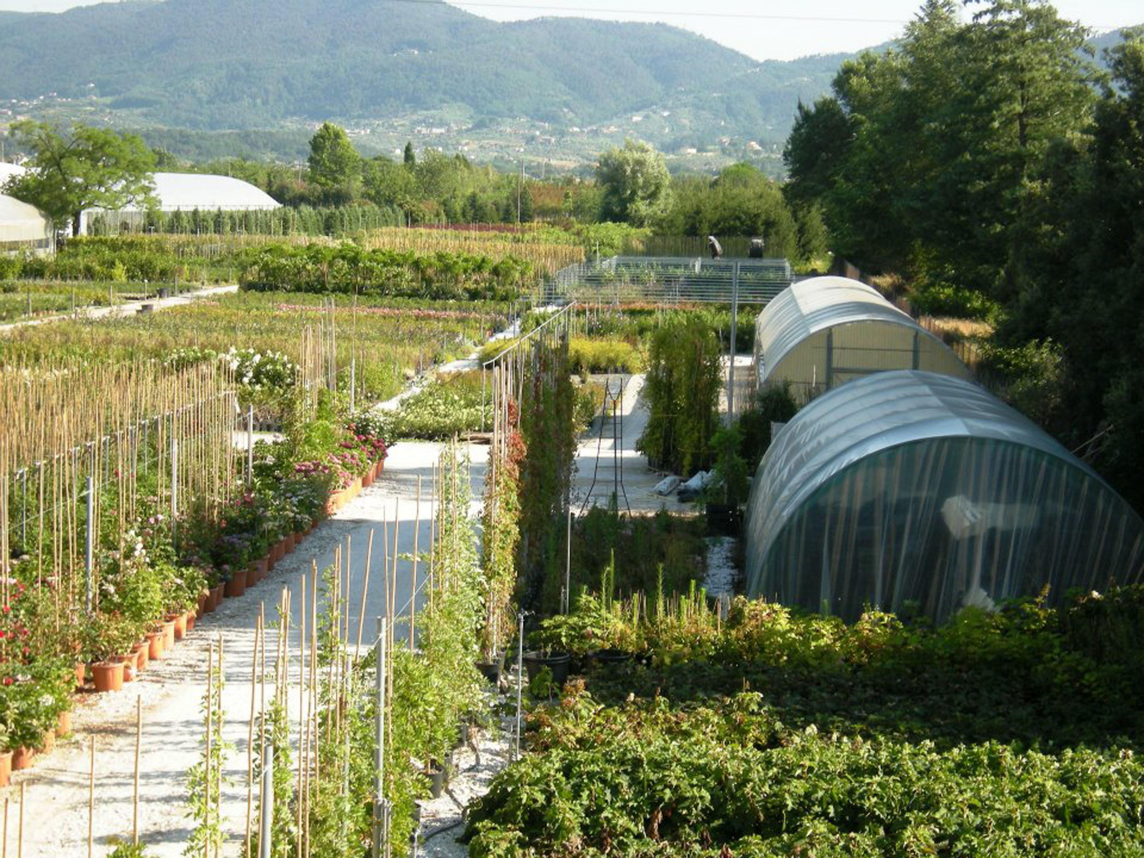 vivaio-ladre-di-piante2