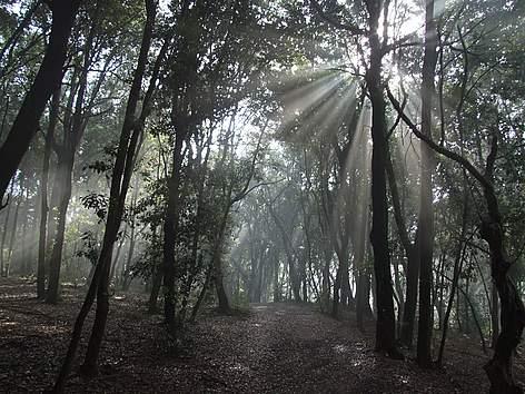 foresta-fpaolella-2987
