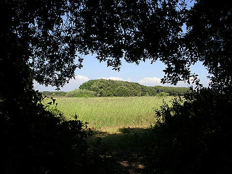 macchiagrande-uscendo-dal-bosco-f-converio-3240