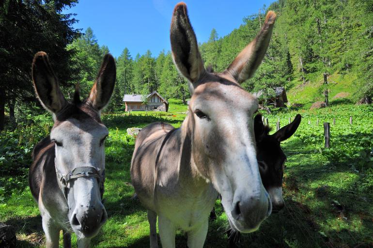 valtrigona-asini-al-centro-visitatori-dell-oasi-wwf-06-2014-gianni-zotta-articleimage