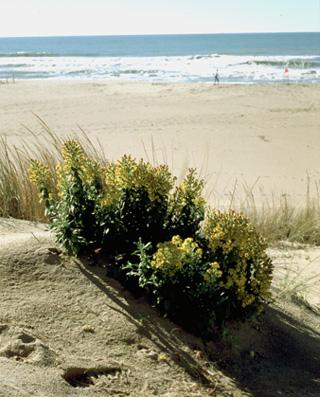 Cover Oasi WWF Dune di Tirrenia