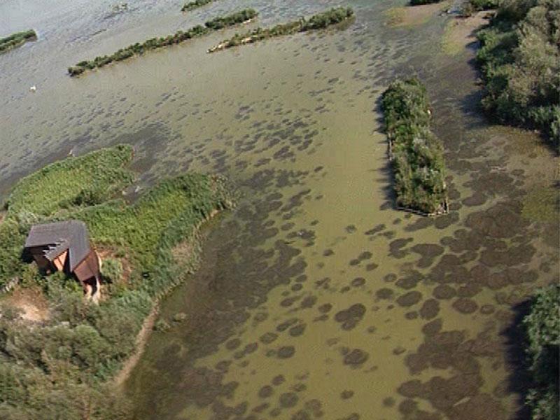 Cover Oasi WWF Lago di Alviano
