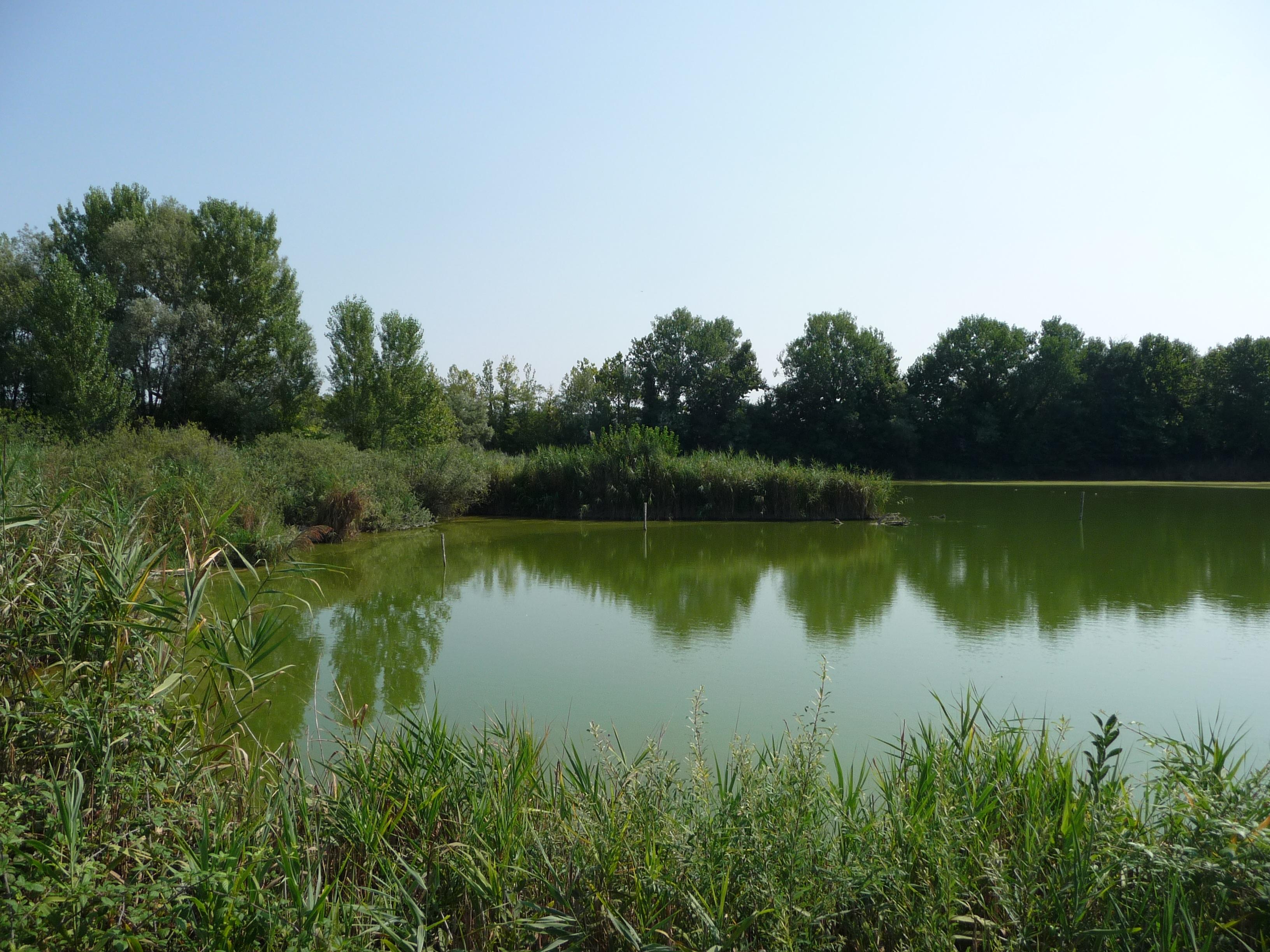 oasi-wwf-stagni-casale-15-agosto-2012-n25