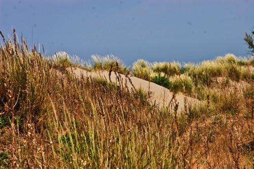 Cover Oasi WWF Dune degli Alberoni