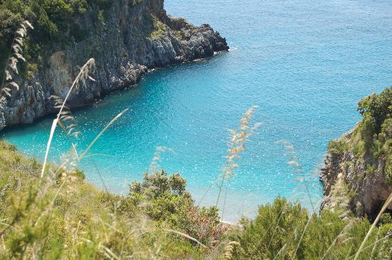 Cover Area marina protetta Costa degli Infreschi e della Masseta, Primula di Palinuro