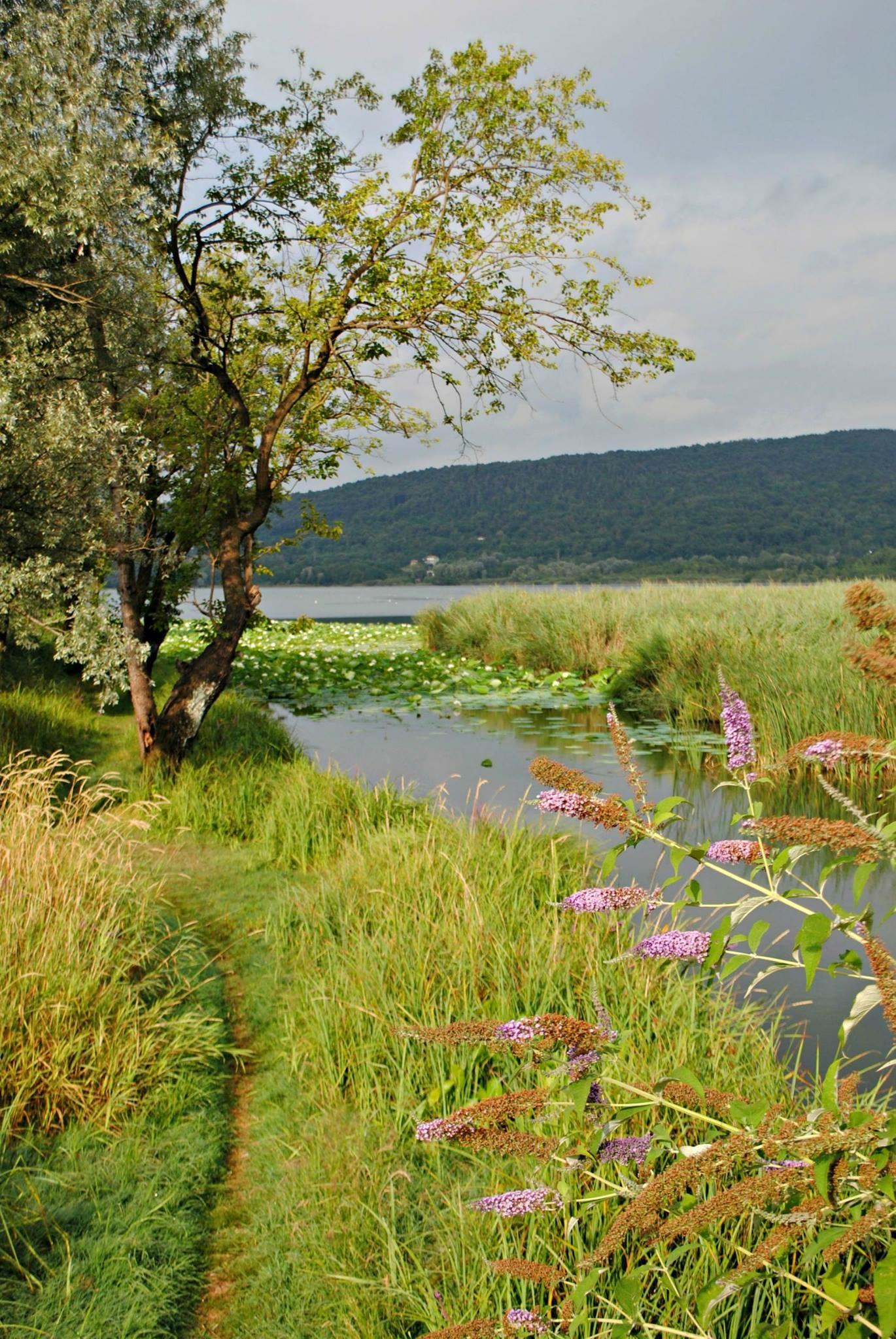 Cover Lago di Comabbio, pista ciclopedonale