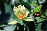 calabria-giard-bot-nicastro