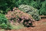 calabria-giard-bot-nicastro1