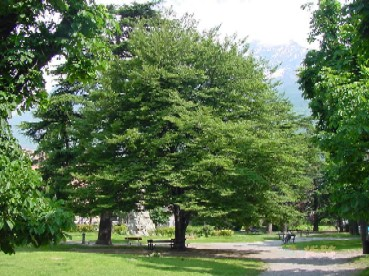 Cover Giardini pubblici di Rue Conseil Des Commis, Aosta