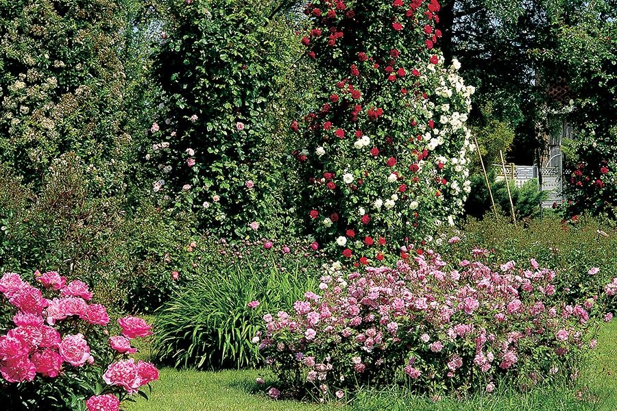 piemonte-giardino-la-rosaiola3