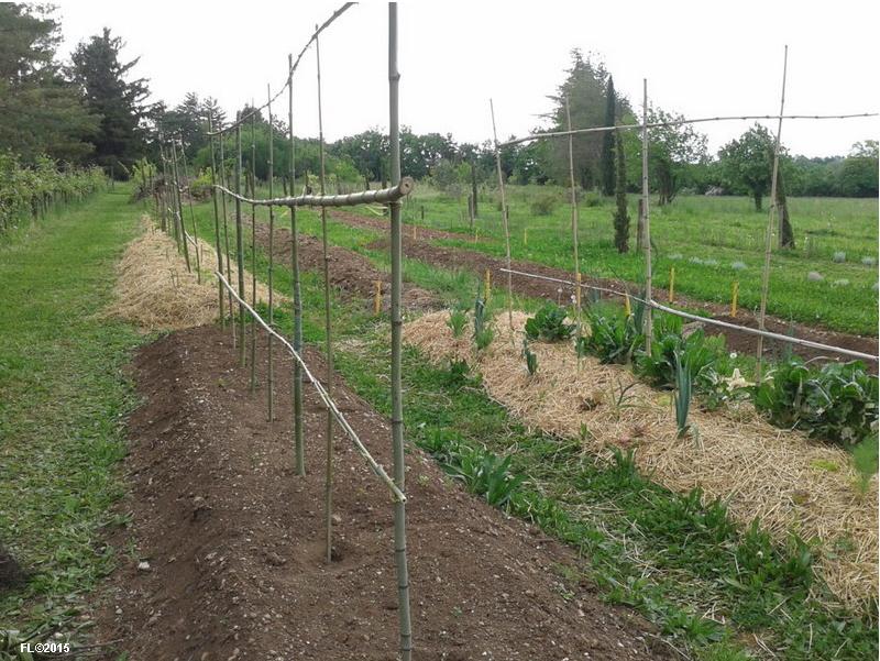 7il-giardino-del-chiostro