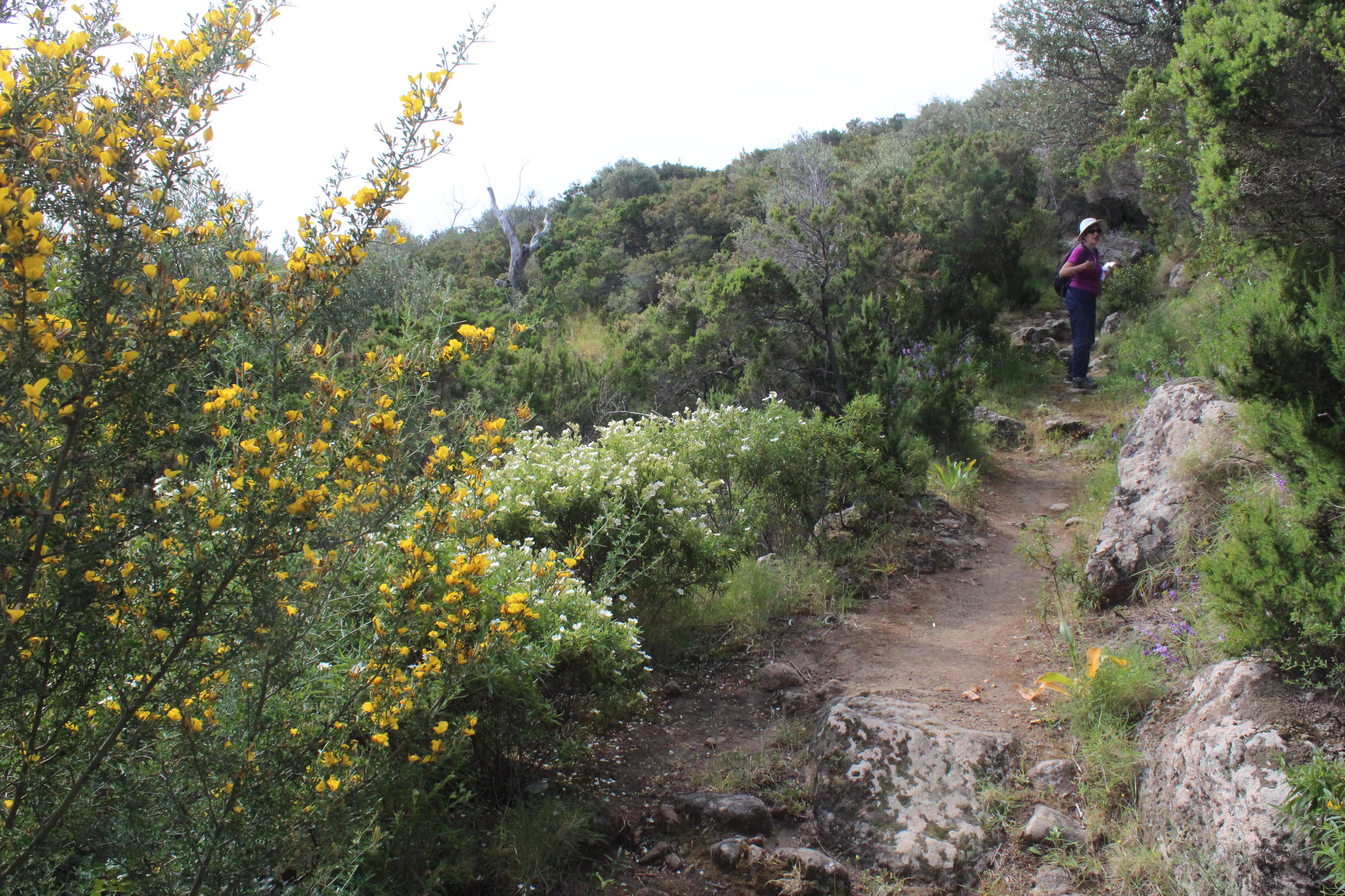 sentiero-per-rocca-corvo-da-panarea-2015-001