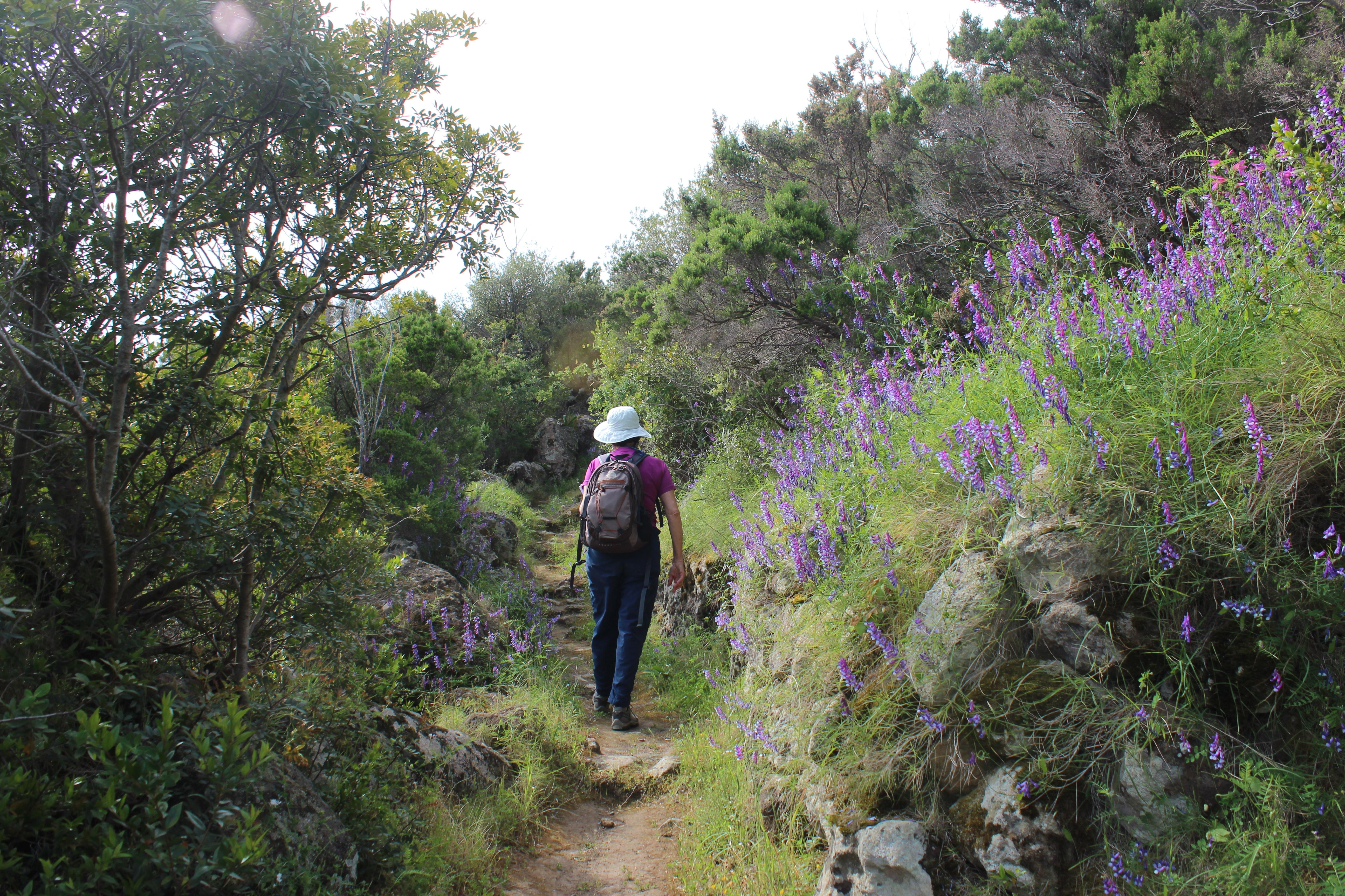 sentiero-per-rocca-corvo-da-panarea-2015-002
