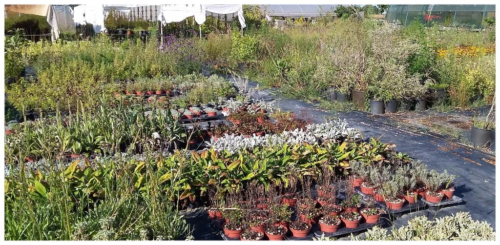 Cover Plantula