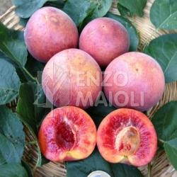 Cover Maioli Frutti Antichi